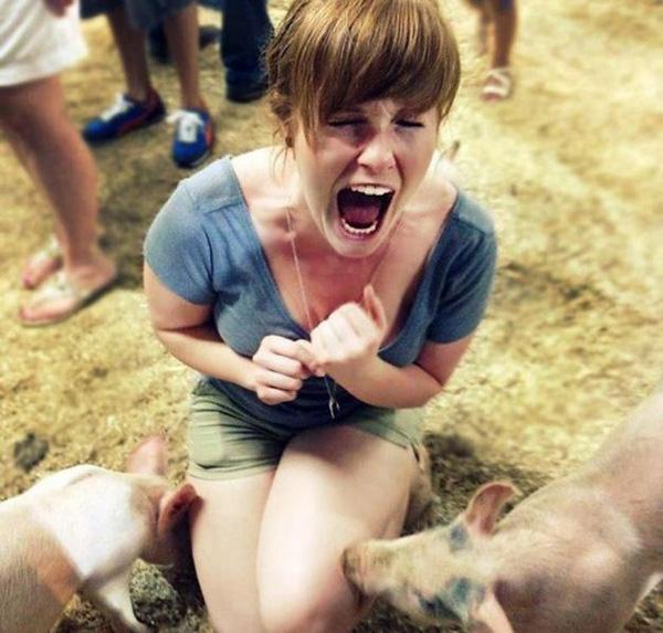 17. Ôi trời ơi, mình không nghĩ lợn thân thiện đến mức này.