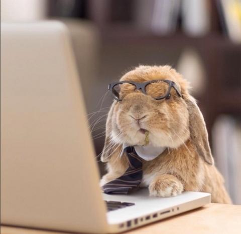 """Chú thỏ tri thức nhất hệ mặt trời chính là đây. Chàng Pui Pui có phong thái rất """"cụ giáo""""."""