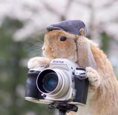 Nhiếp ảnh gia điệu nghệ và lãng tử.