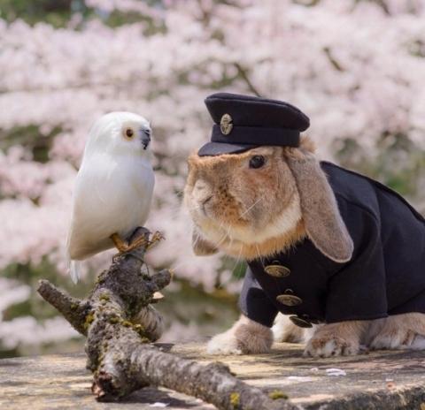 Chơi đùa bên loài động vật khác cũng là thú vui của cậu chàng.