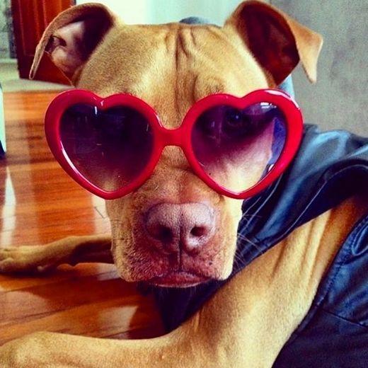Đây là kính mát mà anh Bubba lựa cho em Rue đấy. (Ảnh: Internet)