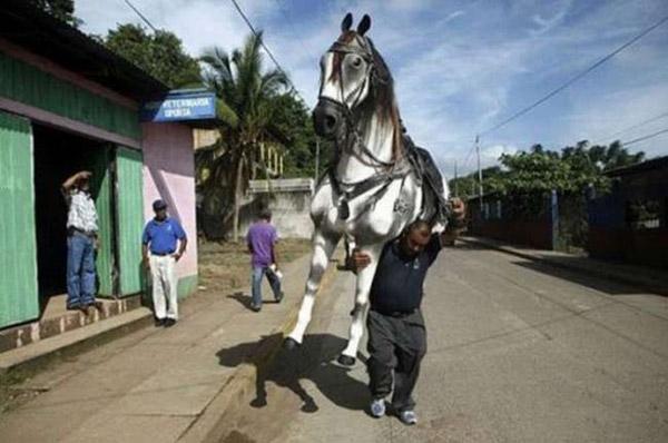 Ô hay, ngựa không cưỡi mà lại cõng thế kia.