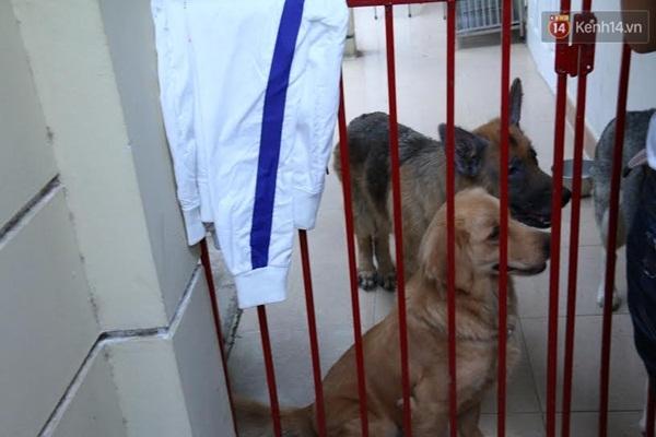 Những chú chó hiện tại còn được nuôi tại trạm.