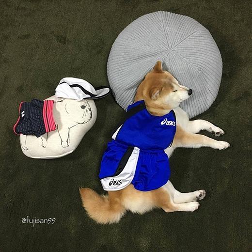 Cùng bạn gối ôm đi thi marathon... trong giấc ngủ này. (Ảnh: fujisan99)
