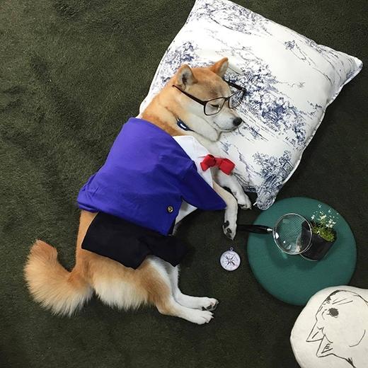 Không biết là đang nghiên cứu gì nữa, nhưng hình như lăn ra ngủ mất rồi. (Ảnh: fujisan99)