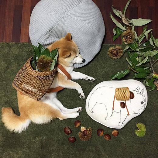 Đi nhặt hạt dẻ trong rừng cũng rất thú vị và thư giãn đấy. (Ảnh: fujisan99)