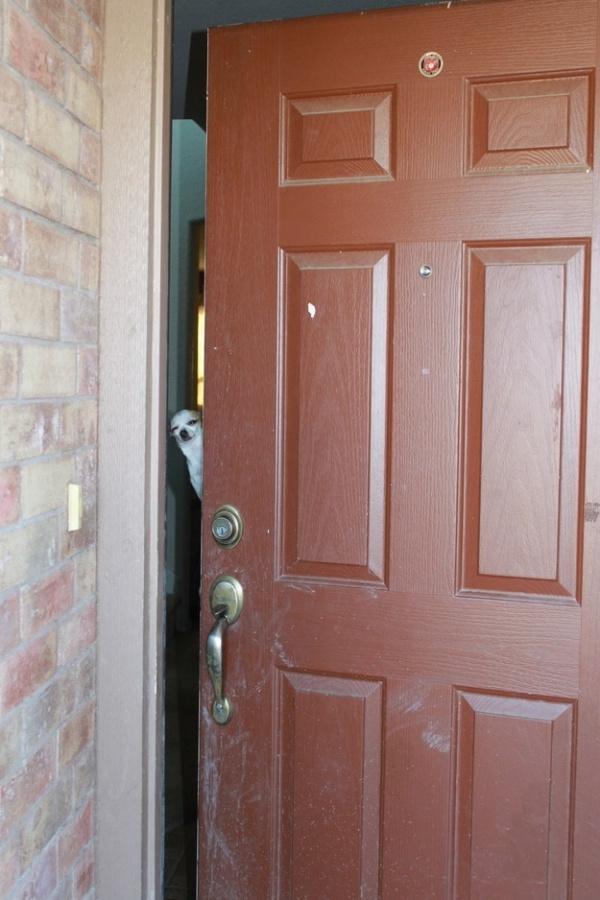 10. Có việc gì mà sáng sớm đã gõ cửa ầm ỹ thế chú em?