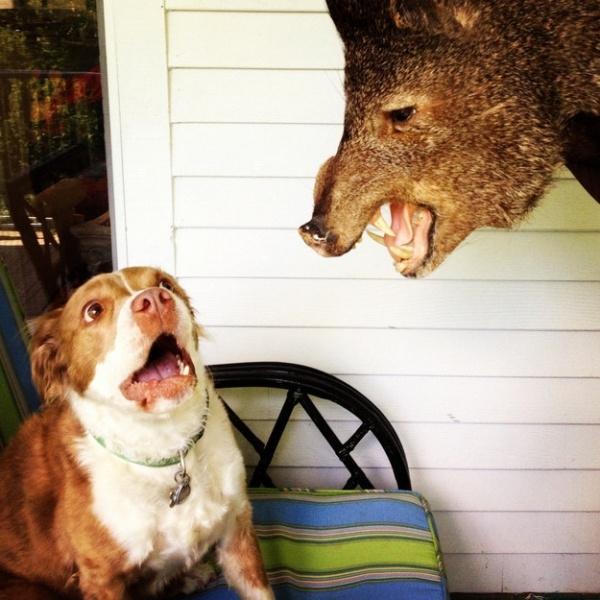"""16. Lần đầu gặp """"đầu gấu"""" em còn chút hoảng hốt."""