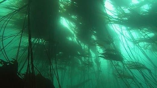 Đoạn phim thông điệp của đại dương khiến triệu người nín lặng