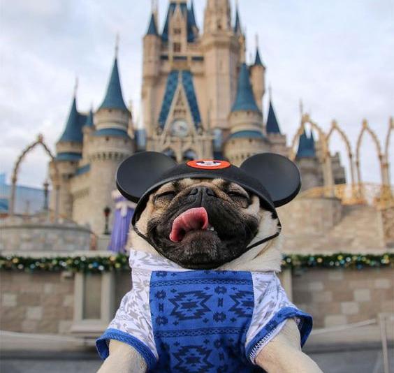 Chẳng có con chuột Mickey nào lại thè lưỡi liếm mũi lố bịch như thế này cả.(Ảnh: Internet)