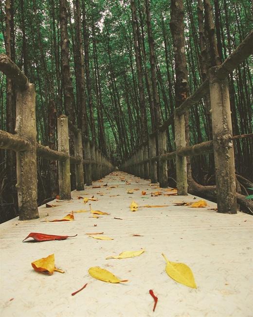 Cây cầu gỗ trong đảo khỉ.(Ảnh: Internet)