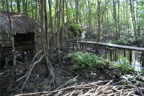 Rừng ngập mặn Vàm Sátthuộc Khu dự trữ sinh quyển thế giới với đa dạng các loài động thực vật.(Ảnh: Internet)