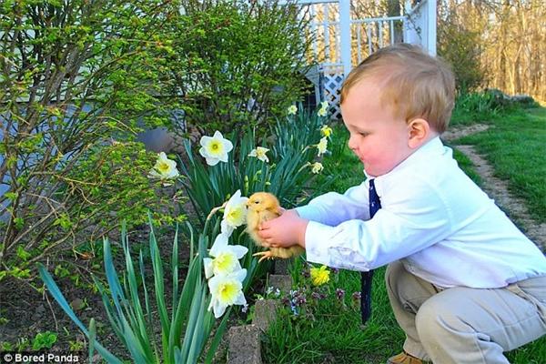 Cậu bé này có vẻ muốn chú vịt con biết thế nào là hương hoa thủy tiên trắng. (Ảnh: Internet)