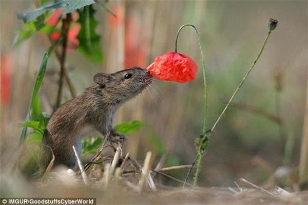 Ngay cả chuột cũng biết đến hương vị thiên nhiênnữa đấy. (Ảnh: Internet)