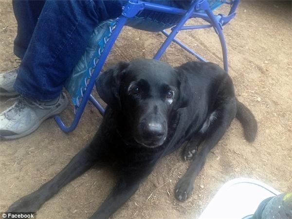 Chỉ mới năm trước, Rowdy còn là một chú chó với bộ lông và làn da bình thường. (Ảnh: Internet)