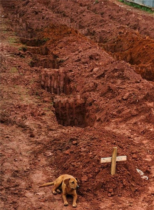 Chú chó này nằm bên mộ chủ suốt 2 ngày liền sau khi cô thiệt mạng trong một vụ lở đất gần Rio De Janeiro.