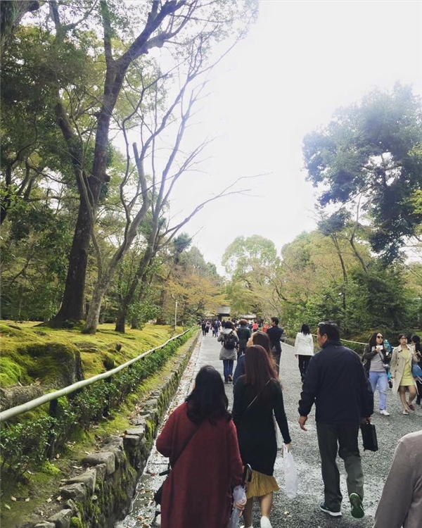 Dòng người đi ngắm hoa ở Nhật Bản. (Ảnh: Diệu Bình)
