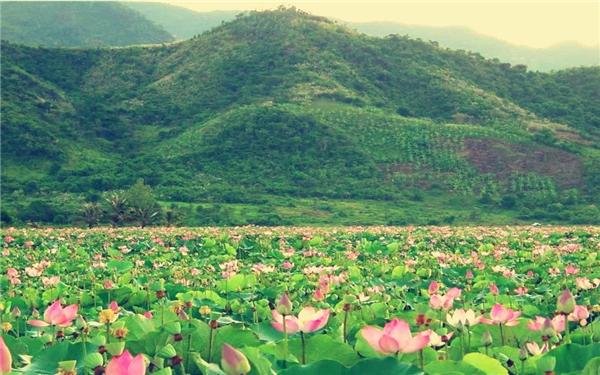 Hồ Quan Sơn - tiên cảnh