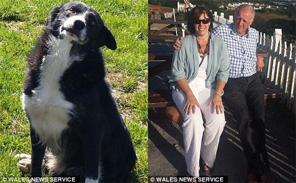 Hai vợ chồng Alan và Shan (ảnh trái) và chú chó trung thành Pero (ảnh phải) (Ảnh: Internet)