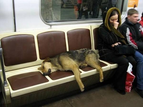 Truyền thuyết về biệt đội chó khôn nhất lịch sử khiến bạn ngỡ ngàng