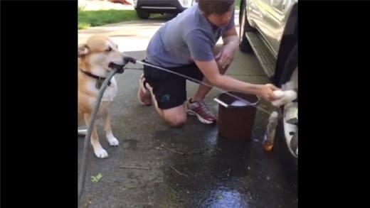 """Cười đau bụng với những chú chó """"ô sin cao cấp"""""""