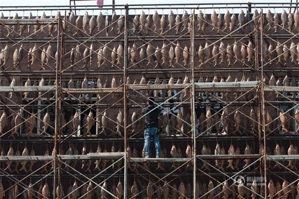 Nhà hàng chuyên các món ăn về cá ở thành phố Trường Xuân hiện đang thu hút sự chú ý rất lớn của dư luận Trung Quốc.