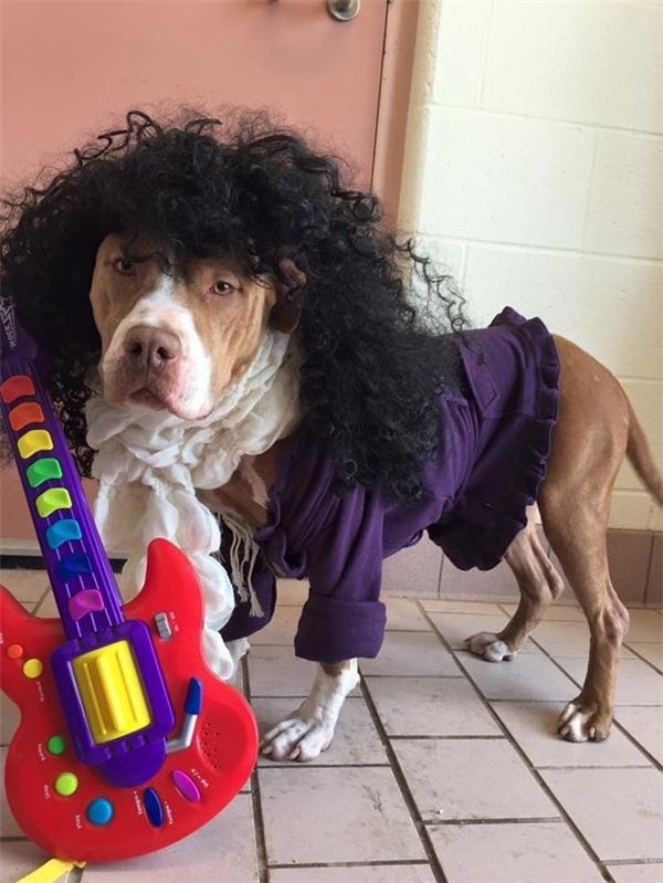 Đáng yêu những chú chó hoàng tử mong được nhận nuôi