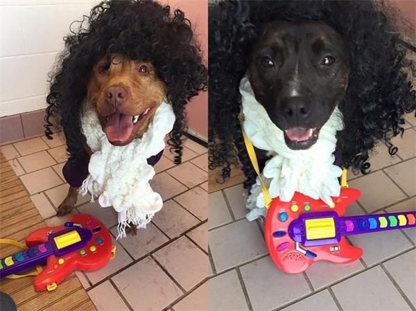 Rosie (ảnh trái), em cún lai 2 tuổi, đang tái diễn lại bài Kiss, trong khi Lisa (ảnh phải), 3 tuổi, thì nở nụ cười đúng chất Prince. (Ảnh: Internet)