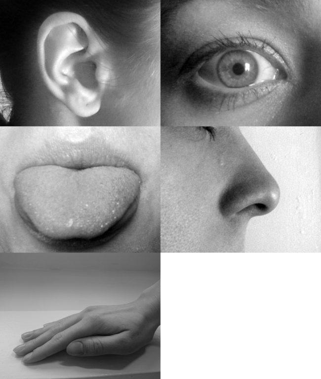 Con người không phải chỉ có 5 giác quan. Các nhà khoa học cho rằng con người có đến 21 giác quan, ngoài thính giác, khứu giác, thị giác, vị giác và xúc giác còn có cảm giác ngứa, cảm giác nóng và lạnh, cảm giác về vị trí các bộ phận trên cơ thể (thường được dùng để đo độ say xỉn của một người), cảm giác căng thẳng hay áp lực, cảm giác đau, cảm giác đói và khát, cảm giác về thời gian…