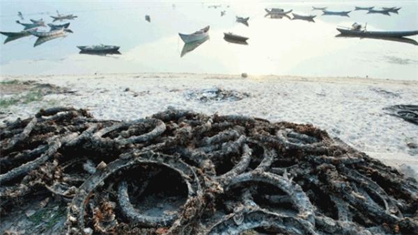 Thông tin thất thiệt làm ảnh hưởng người nuôi hàu ở Lăng Cô