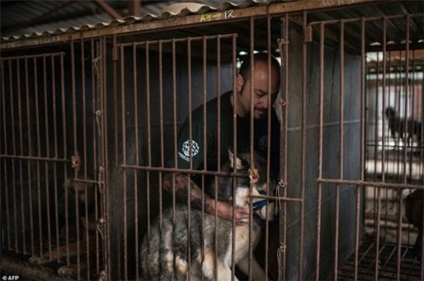 Những chú chó đáng thương này luôn bị giam cầm trong lồng sắt từ khi còn bé cho tới lúc chuẩn bị lên bàn mổ để làm thịt.