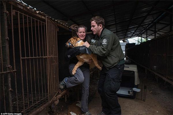 Vào năm 2015, họ từng giải cứu 225 con chó ở 4 trang trại. Thế nhưng, chỉ riêng ở đây đã có tới 200 con vật tội nghiệp.