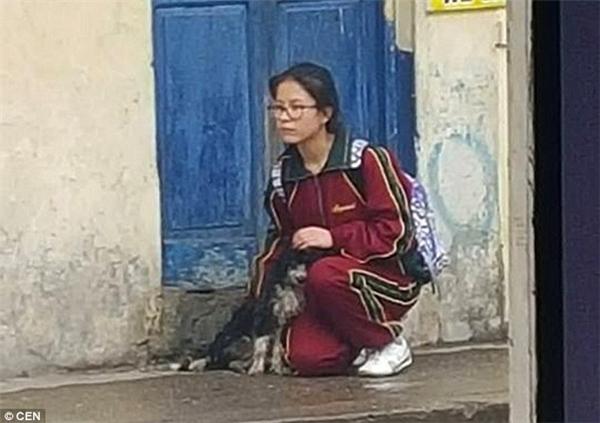 Hình ảnh cô gái dừng lại bên đường che mưa cho chú chó lang thang khiến nhiều người cảm động