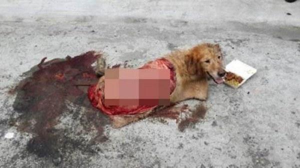 Chú chó bị thương rất nặng ở lưng