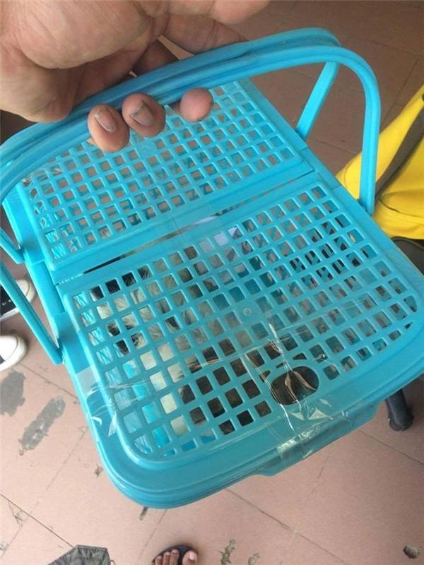 Hình ảnh em cún trước khi được chuyển ra Thanh Hóa choN.M.(Ảnh: Internet)