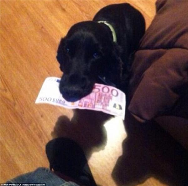 """Có ai dám dùng 500 euro để huấn luyện cún cưngnhư ông bố siêu """"ngông"""" này không nào?(Ảnh: Rich Parents of Instagram)"""