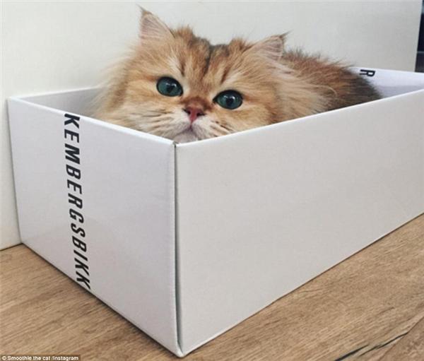 Gặp gỡ bé mèo được mệnh danh ăn ảnh nhất thế giới