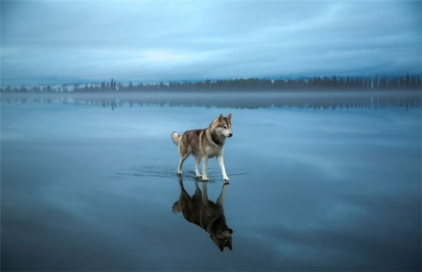 Giá mà mình cũng có thể lướt đi trên nước tao nhã như chú chó này. (Ảnh: fubiz)