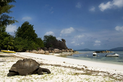"""Nhờ những chính sách bảo tồn,Seychelles trở thành """"nhà"""" của nhiều loại sinh vật quý hiếm"""