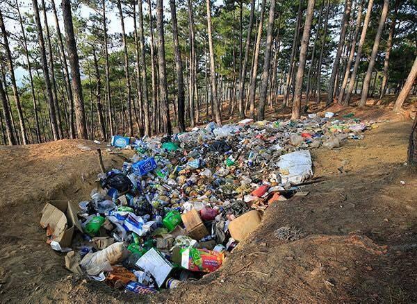 Đồi thông, vệ cỏcũng đột nhiêntrở thành hố rác. (Ảnh: Internet)