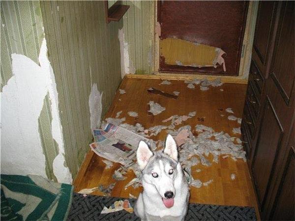 Là giấy dán tường, dán cửa rởm nên lột phát rách ngay. (Ảnh: Internet)