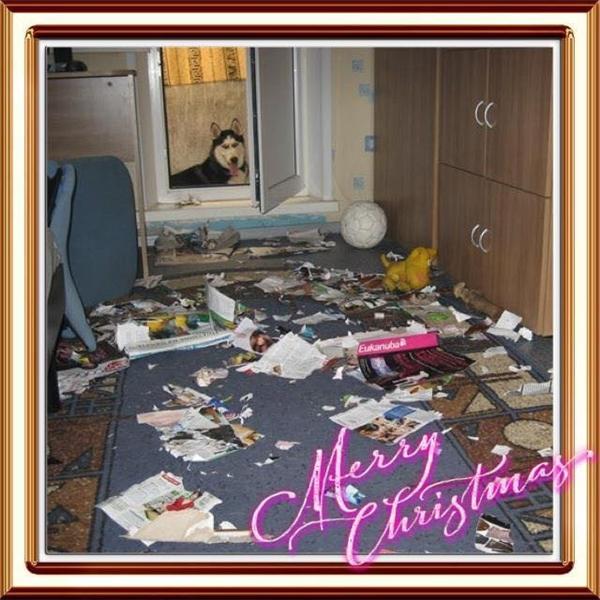 Mừng Giáng sinh chủ yêu dấu. Tranh thủ lễ lạc thì dọn dẹp nhà cửa luôn thể. (Ảnh: Internet)