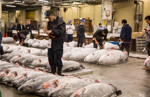 Xem bán đấu giá cá ngừ ở chợ Tsukiji: Tsukiji là một trong những chợ cá lớn nhất thế giới, họp từ sáng sớm và là nơi cung cấp nguyên liệu cho các nhà hàng Tokyo. Chỉ khoảng 120 người được vào xem đấu giá cá hồi, loại hải sản đắt giá được người dân yêu thích. Ngoài ra, bạn có thể ghé thăm các quầy hàng và thưởng thức nhiều món ngon quanh chợ. Ảnh: Irinakalashnikova.