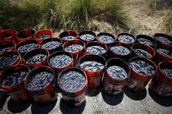 Các tình nguyện viên thu thập những hộp đựng đầy dầu tại bờ biển Refugio vào ngày 20/5/2015.