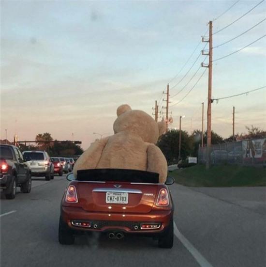 """Ai bảo là anh không có """"gấu"""" để đi chơi hả?"""