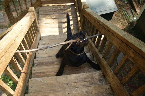 Kẻ nào ngu ngốc đóng cái cầu thang gì mà bé như cái lỗ mũi vậy nhỉ?