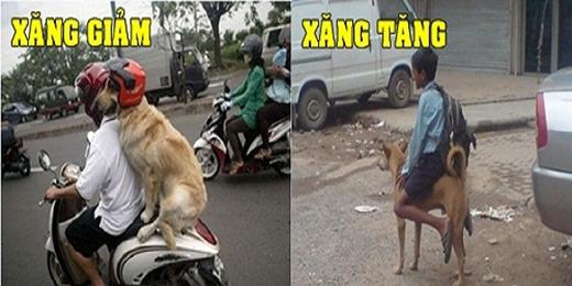 """Dân gian có câu """"Lên voi xuống chó"""". Còn ngày nay là lên xe xuống cho. (Ảnh: Internet)"""