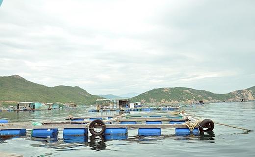 Hầu hết nhà nào ở Bình Ba đều có bè nuôi tôm hùm. (Ảnh: Internet)