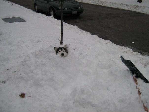 Chú rất thích nghịch tuyết.