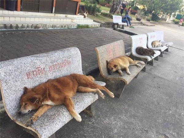 Ghế của ai người đấy nằm nhé.